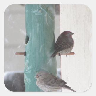 Pájaros de la nieve pegatina cuadrada