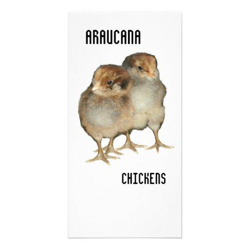 Pájaros de la ornitología de los pollos del arauca plantilla para tarjeta de foto