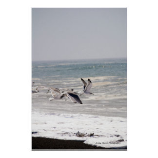 Pájaros de la playa 1 poster