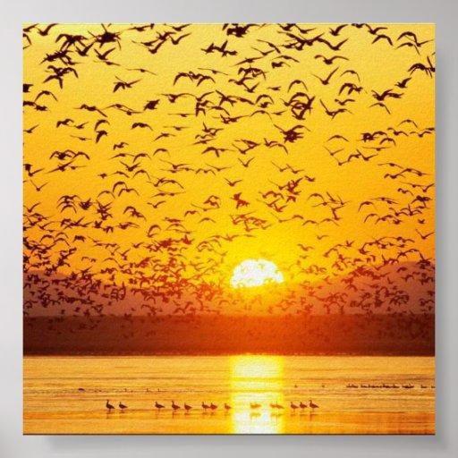 pájaros de la puesta del sol impresiones