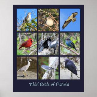 Pájaros de las fotos de la Florida Póster