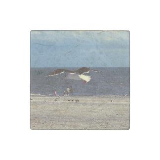 Pájaros de las gaviotas en la foto de la playa de imán de piedra