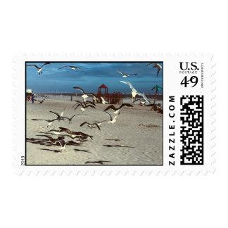 Pájaros de las gaviotas en la foto de la playa de franqueo