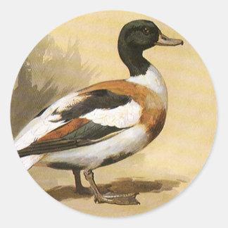 Pájaros de los animales salvajes del vintage pato etiquetas redondas