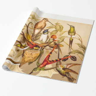Pájaros de los pájaros de los colibríes del pájaro papel de regalo