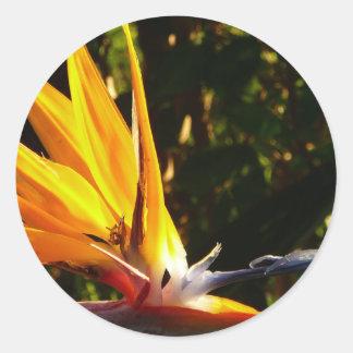 pájaros de los paradis frecuencia intermedia etiqueta redonda