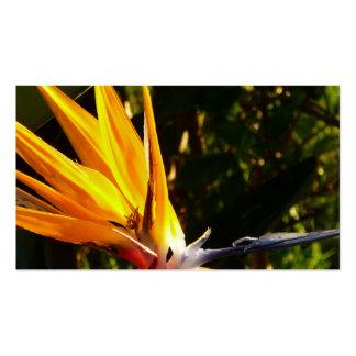 pájaros de los paradis frecuencia intermedia tarjetas de negocios