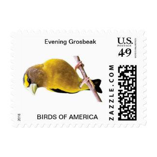 Pájaros de los pinzones del América-Pájaro Estampillas