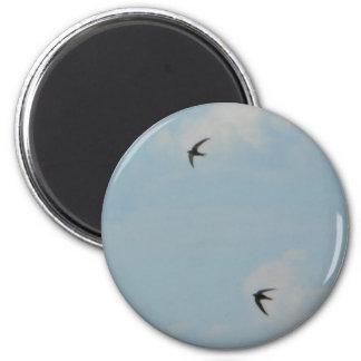Pájaros de los tragos imán redondo 5 cm