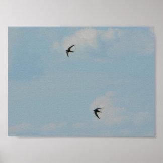 Pájaros de los tragos póster
