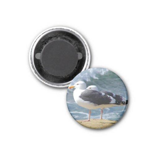 Pájaros de mar imán para frigorifico