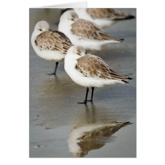 Pájaros de mar tarjetón