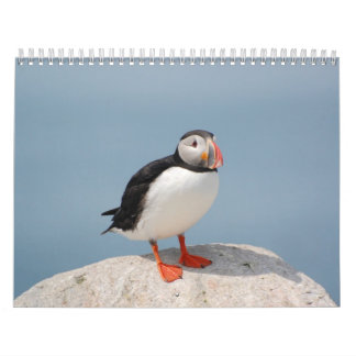 Pájaros de Norteamérica del este Calendario