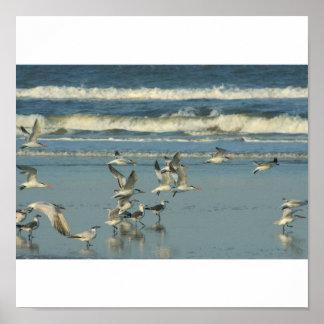 pájaros de orilla en la playa poster
