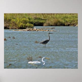 Pájaros de orilla posters