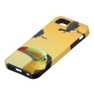 Pájaros de Toucan iPhone 5 Cárcasa