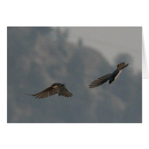 Pájaros de vuelo felicitacion
