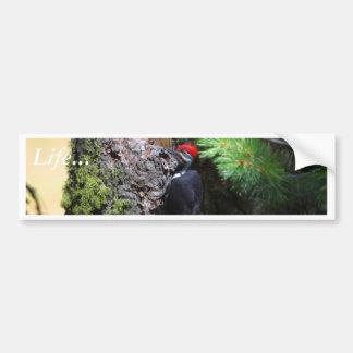 Pájaros de Wookpeckers Pegatina De Parachoque