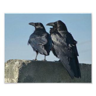 Pájaros del amor cojinete