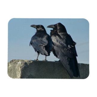 Pájaros del amor imanes de vinilo