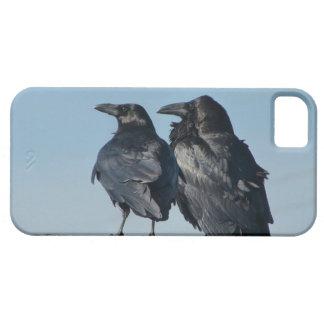 Pájaros del amor iPhone 5 carcasa