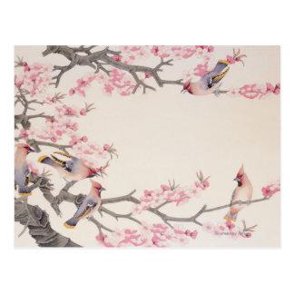 Pájaros del canto en primavera postal