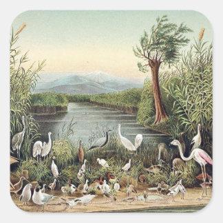 Pájaros del Cáucaso Pegatina Cuadrada