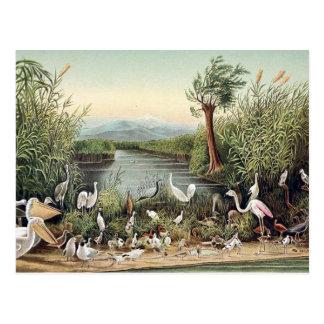 Pájaros del Cáucaso Postal