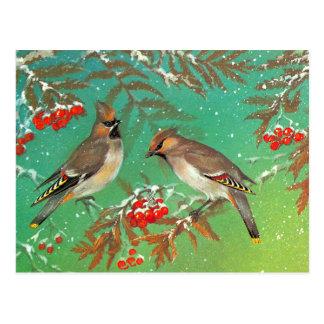 Pájaros del invierno postales