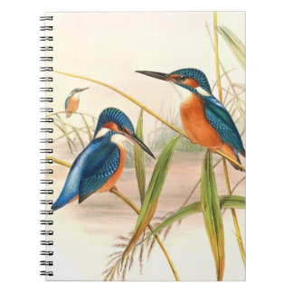 Pájaros del martín pescador de Goulds Spiral Notebooks