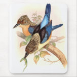 Pájaros del martín pescador de Goulds Tapetes De Raton