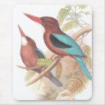 Pájaros del martín pescador de Goulds Alfombrillas De Ratones