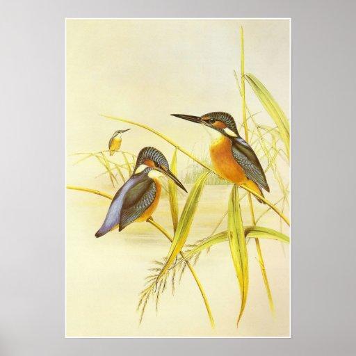 Pájaros del martín pescador del vintage del poster
