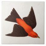 Pájaros del pájaro cantante del pájaro del Tanager Azulejo