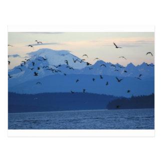 Pájaros del panadero w del Mt Postal