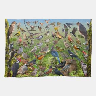 Pájaros del patio trasero de la toalla del oeste