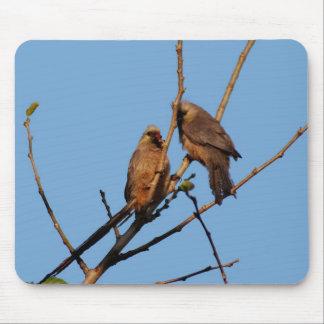 Pájaros del ratón en el árbol alfombrillas de ratón