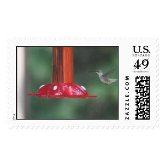 pájaros del tarareo timbre postal
