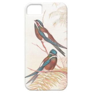 Pájaros del trago de Goulds iPhone 5 Cárcasa