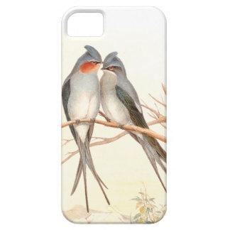 Pájaros del trago de Goulds iPhone 5 Protector