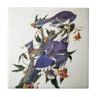 Pájaros del vintage azulejos
