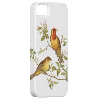 Pájaros del vintage iPhone 5 carcasas