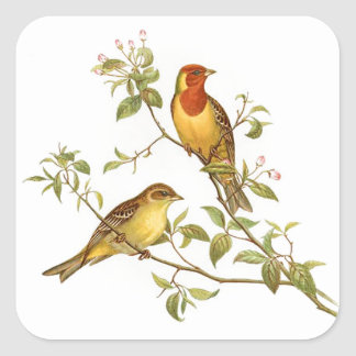 Pájaros del vintage pegatina cuadrada