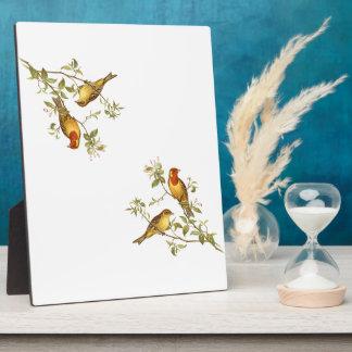 Pájaros del vintage placa