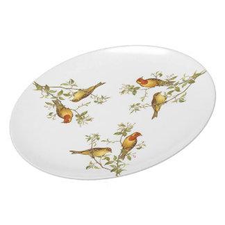 Pájaros del vintage platos