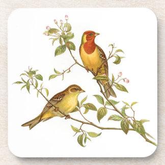 Pájaros del vintage posavasos