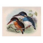 Pájaros del vintage postal