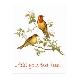 Pájaros del vintage postales