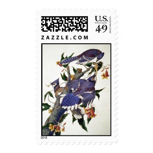 Pájaros del vintage sellos postales