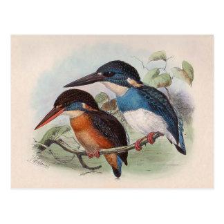 Pájaros del vintage tarjetas postales